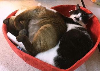 手漉き和紙(国産)の猫ベッド【ハート型】