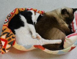 手漉き和紙の猫ベッド ざ・ぴーにゃっつ